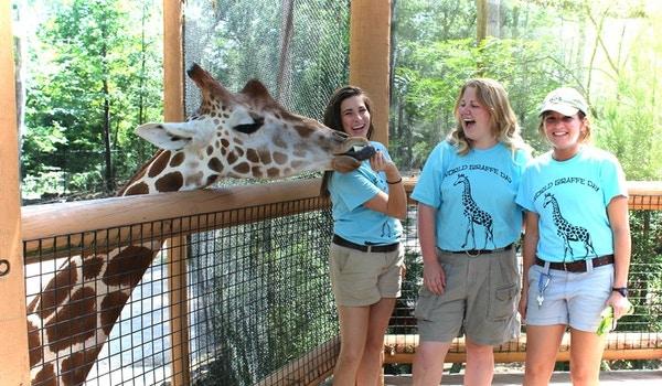 World Giraffe Day T-Shirt Photo